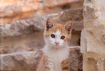 Cats / by Helene Tate