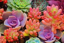 Plants, flowers and succulents