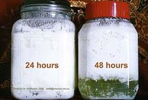 Fermented Foods and Beverages