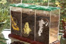 Homeschool // Ecology & the Environment