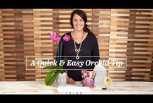 Garden Orchid Care