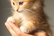 Cute cats on hands