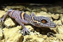 Gecko,Chamäleon und Co.