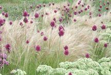 trawy ozdobne kompozycje