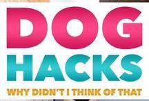 Doghacks