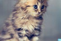 BB animaux tros cute