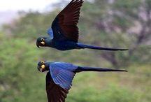 Papegaaien - Parrots