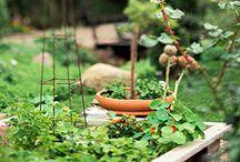 Raised Bed Gardening / by Ellen Lyon