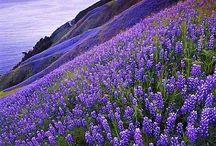 Csodálatos növényvilág