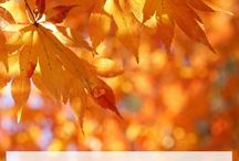 Awesome Autumn / Everything to do with my favorite season. :) From apples to pumpkins to thanksgiving - activities, foods, crafts, and more!