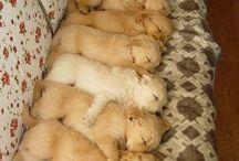 8 σκυλακια