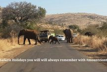 Best Safaris in South Africa