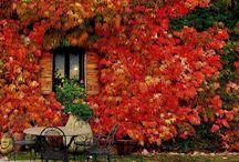 Autumn  / by That Vegan Woman