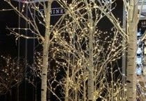 Arvores iluminadas