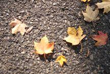 Fall / by Meta Webb
