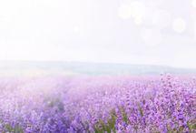 Naturkosmetik Frankreich, Provence
