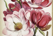 Antiqued Botanic illustration....Flower..... / Historical botanical illustration