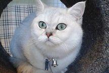 Catnip Cattery