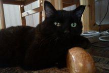 Cats / Rambomy darlin´ <3