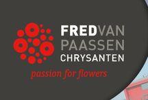 G-Fresh grower Fred van Paassen / Fred van Paassen Chrysanten is modern nursery of spray chrysanthemums with over 25 years of experience in the production of spray chrysanthemums.