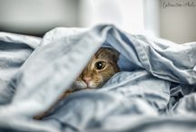 Cats... Just cats.. / by Sarah Shackelford