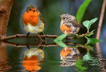 schütze die wildvogel