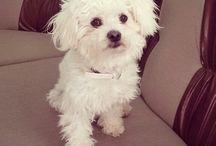 My lovely lovely dog..  Sasha