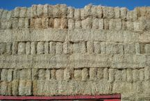 Square Bales of Hay & Forage / All types of Square Bales. Small Bales 2-Tie & 3-TIe and Large Bales 3x3, 3x4 and 4x4.