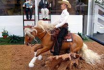 Models  horses