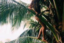 Beach - Palms/Trees