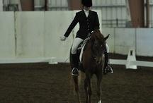 Equine 'keep calm'