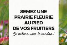 Jardin : Arbres fruitiers
