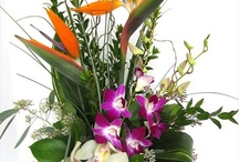 Tropicals / Tropical flowers are always festive and beautiful