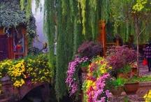flowers etc. / by Bobbie Knight