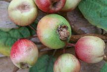 Ovocie