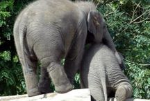 Elephants ❤️ / by Tara Newport