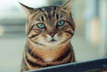 Cat&Fun :)
