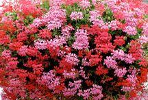 flower green  2 / by Nabina Vajracharya
