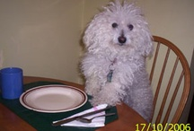 My Rescue Pets / Buddy (bichon) passed away suddenly with liver cancer in Feb'10, after loving him for 12 years.