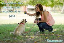 Consejos perrunos / Pequeños tips y consejos para el cuidado de nuestras mascotas