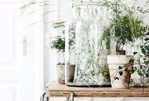 greens and interior