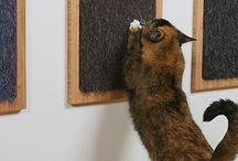 Katzenzubehör