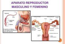 Aparato Reproductor Masculino y Femenino.