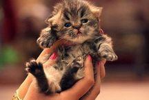 meow / masi blm mengerti