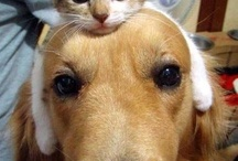 Puppies and Kitties