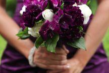 Wedding / Dream wedding