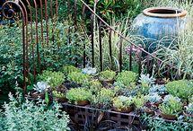 Garden dream