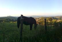 Vivere la Maremma Toscana