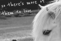 all things horsey