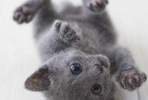 kočky  / Kočky jsou nádherná zvířata. Mám je moc ráda.